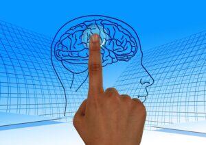 脳の中心部を表現
